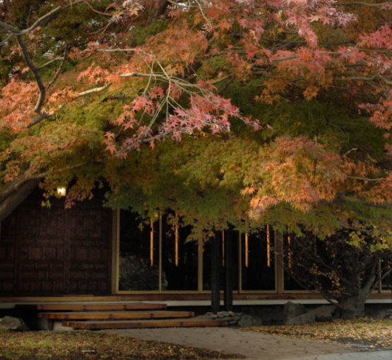 Jardines del museo